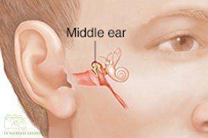 الأذن الوسطى